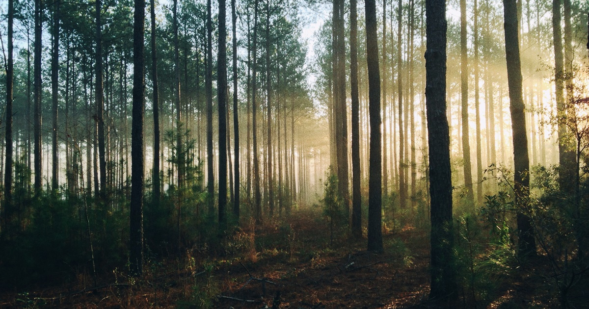 Inspirational Poetry Quotes, image of light shining through forest trees, books