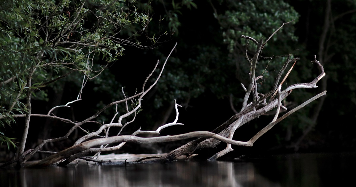 Poems About Depression, image of a fallen tree in the water, books