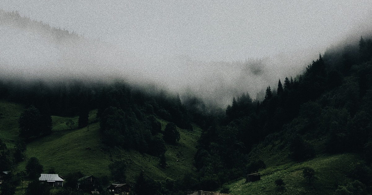Poems About Depression, foggy image of pine trees on hilly land, books