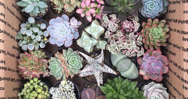 Group of succulents sitting in a box ready to be shipped