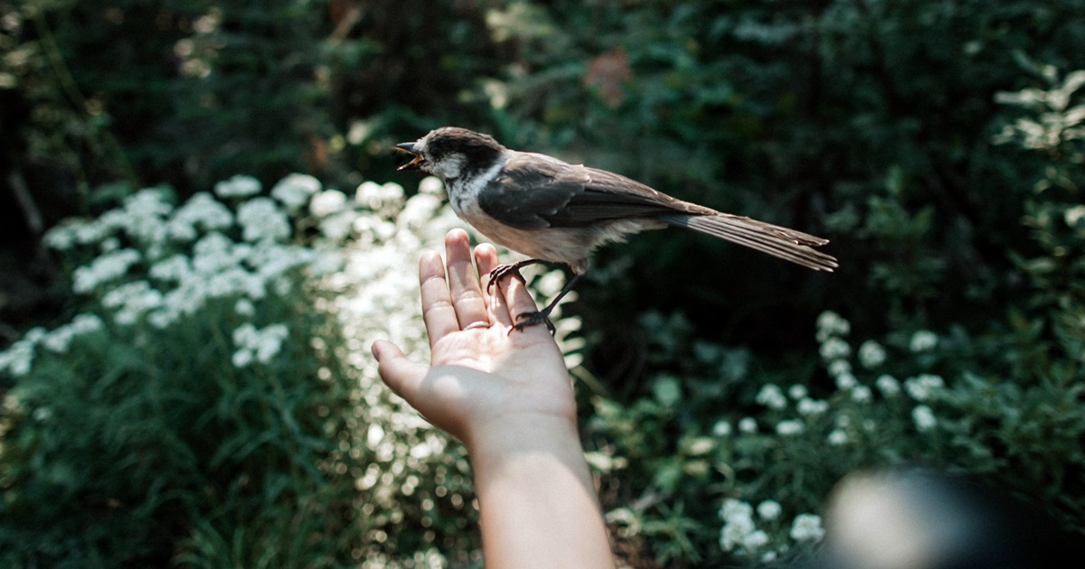Ralph Waldo Emerson Quotes, image of a bird resting on a white hand, books