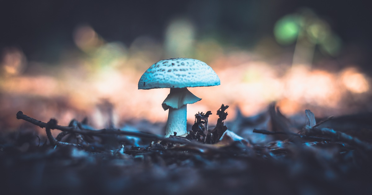 Ralph Waldo Emerson Quotes, image of a mushroom growing from the ground, books