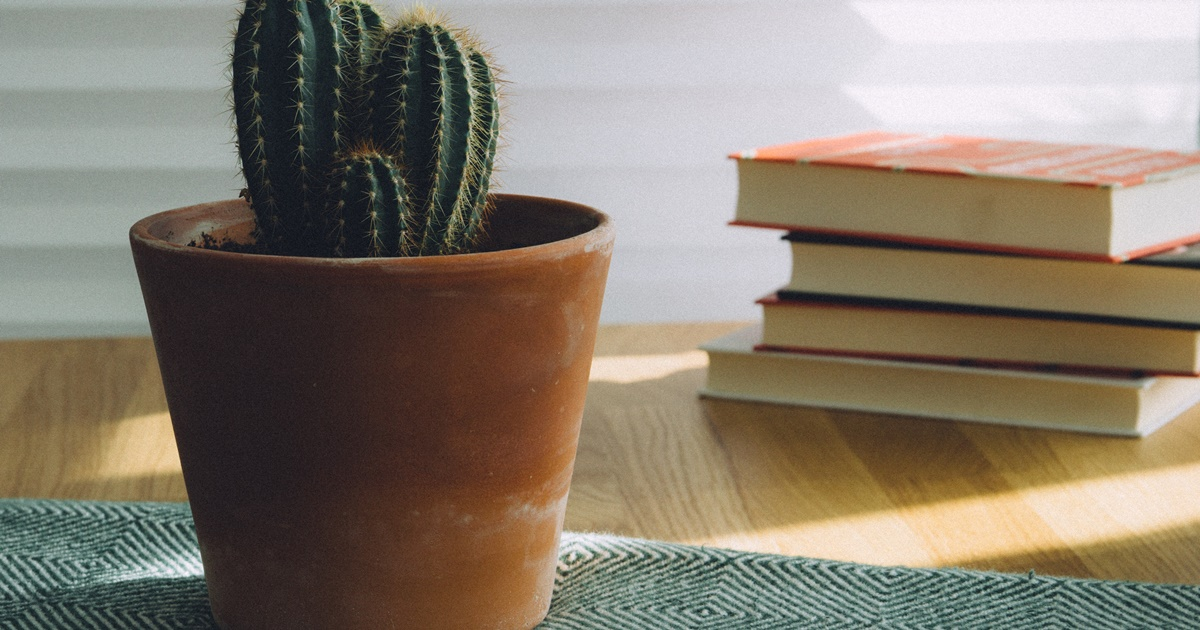 Find Title of Romance Novel, image of a small potted cactus with books in the background, books