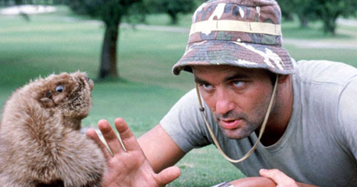 Bill Murray squaring off against a gopher in Caddyshack