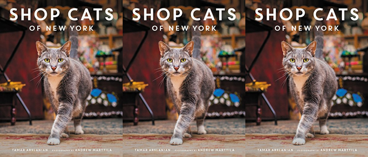 cheap coffee table books, shop cats of new york by tamar arslanian, books