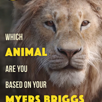 Quiz: Which Animal Are You Based On Your Myers Briggs