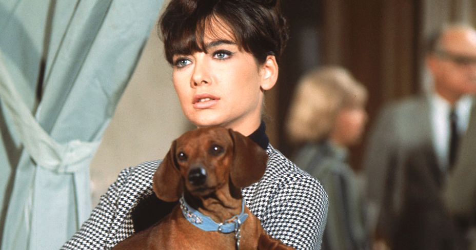 Suzanne Pleshette holding a dachshund looking confused in a scene from Disney's 'The Ugly Dachshund'