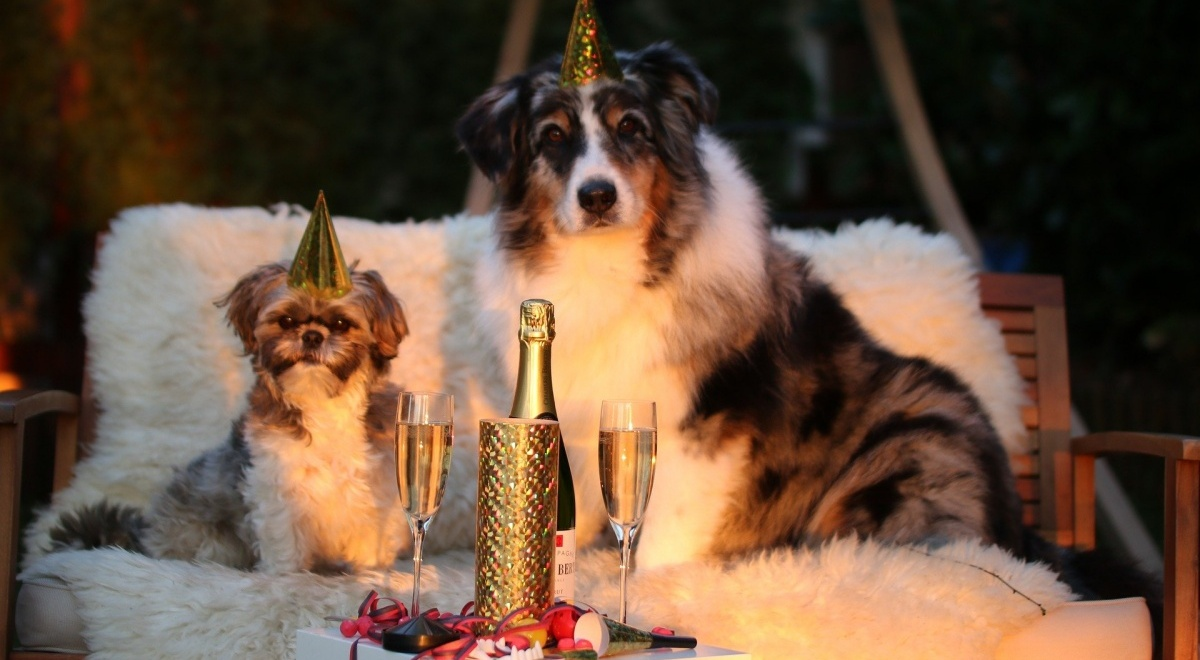 new year's eve romance novels, image of two dogs ringing in the new year, books