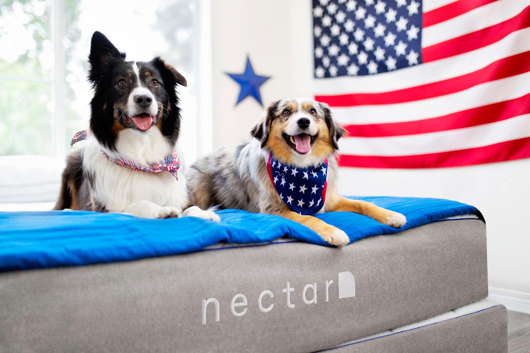 The Nectar mattress, animals, health, home