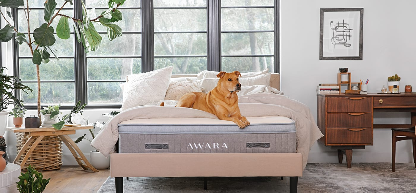 The Awara mattress, animals, health, home