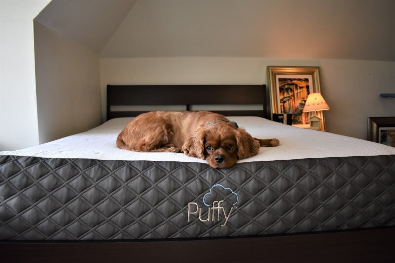 The Puffy mattress, animals, health, home