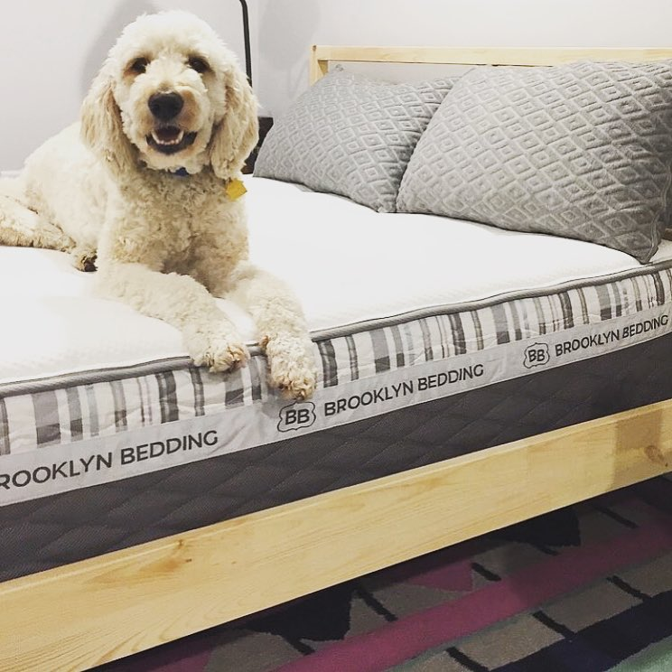 The Brooklyn Signature Hybrid by Brooklyn Bedding, animals, health, home