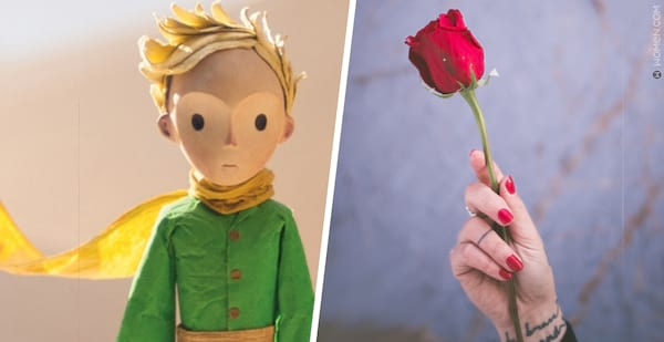 The Little Prince, flower