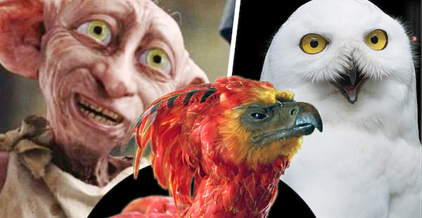 harry potter creature, dobby, Hedwig, Fawkes