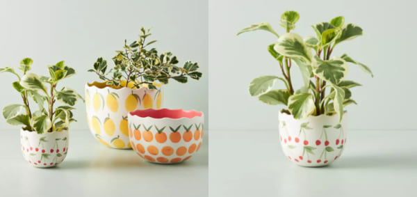 family, two images of plant pots decorated with painted fruit