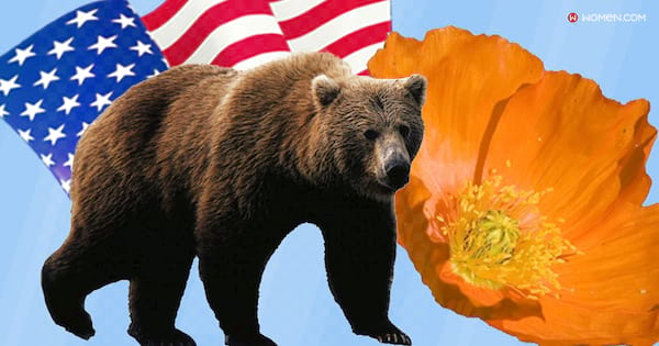 california, American states, grizzly bear, poppy flower, American