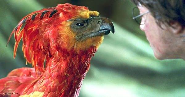 Fawkes, harry potter